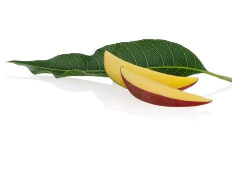 Aveda Mango